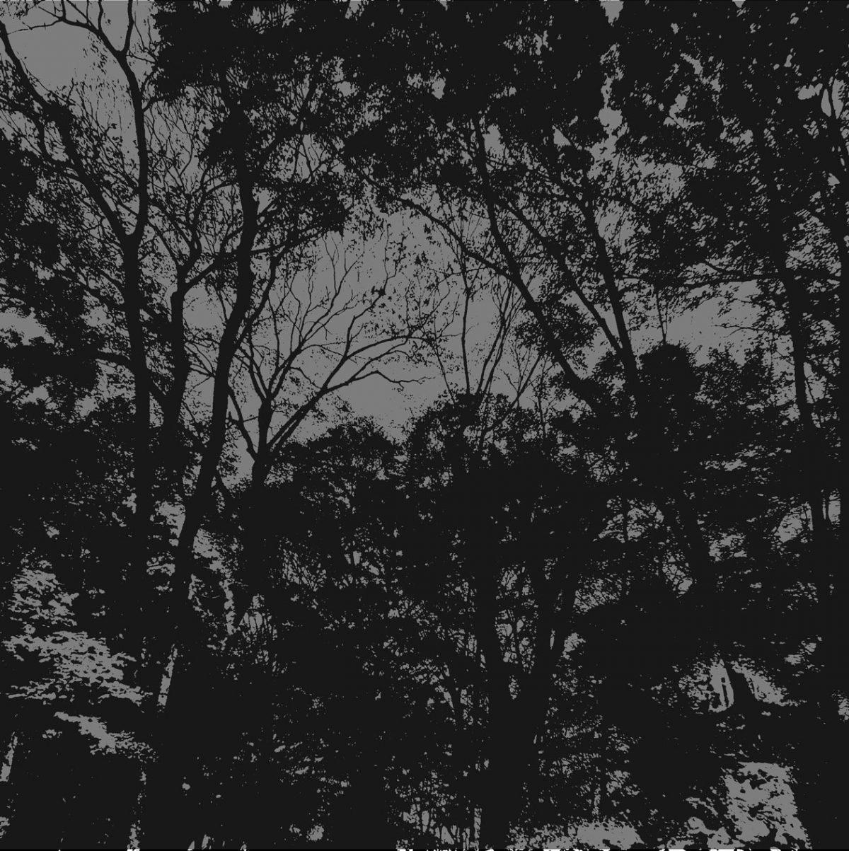 BaBanensの森